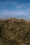 Hay fever 5. Tall grass on sand dunes on the west coast of ireland stock images