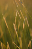 Hay field. With soft and warm colors Stock Photography