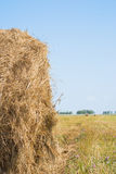 Hay on field Stock Photos