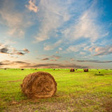Hay on field Stock Photo