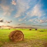 Hay on field Stock Photo