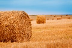 Hay field Royalty Free Stock Photography