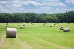Hay Field Royalty Free Stock Photo