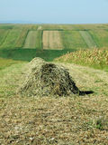 Hay on field Stock Image