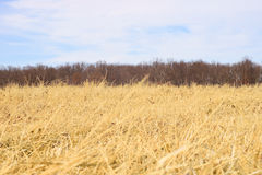 Hay field Royalty Free Stock Image