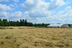 Hay field. A Hayfield in Aldergrove B.C. Canada drying in the sun Royalty Free Stock Photography