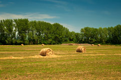 Hay on field Stock Images