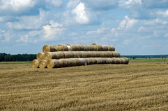 Hay on field. Photo of hay on field royalty free stock photo