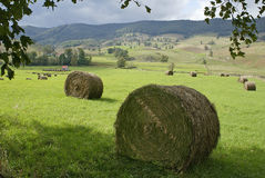 Free Hay Field Stock Photo - 21280
