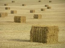 Hay in the field Stock Image