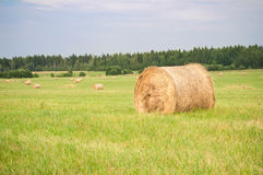 Hay on the field Royalty Free Stock Photo