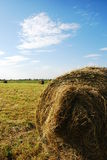 Hay in Field Stock Image