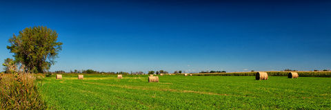 Hay Field Royalty Free Stock Photos