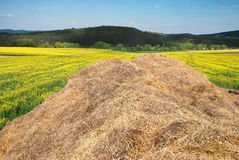 Hay and field Royalty Free Stock Photos