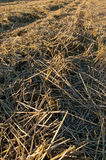Hay on the field Royalty Free Stock Photos