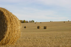 Hay field. A hay field in late fall Stock Photo
