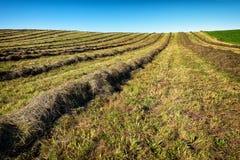 Hay Field Fotografia de Stock