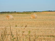 Hay Field Foto de Stock Royalty Free