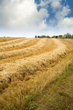 Hay Field Stock Photography