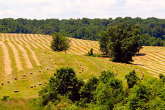 Hay Field. Freshly cut hay field photographed in Fauquier County, Virginia stock photo