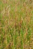 Hay Field Fotografie Stock