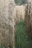 Hay Field Foto de archivo