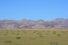 Hay field along the Arizona California border September 2016. This was taken along Highway 95 in western Arizona near Parker, AZ in September 2016 Stock Photo