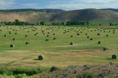 Hay Field avec l'irrigation et Hay Rolls photo libre de droits