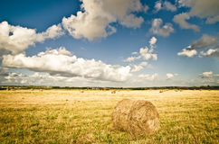 Hay in the field Stock Photos