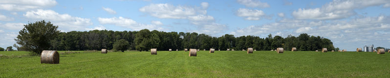 Hay Field Bales Farm Land Panorama, Banner. Panoramic of round hay bales drying in a farm field. The hay is waiting for the farmer to collect them and will be Stock Photo