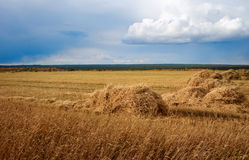 Hay field with a beveled Royalty Free Stock Image