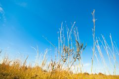 A Hay field with a blue sky background royalty free stock photography