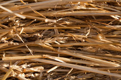 Hay field closeup Royalty Free Stock Photo