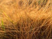 Hay Field dans la campagne Image libre de droits