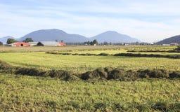 Hay Field en el ajuste del paisaje Fotografía de archivo libre de regalías