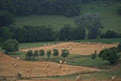 Hay Field en Francia con los cuervos Imagen de archivo
