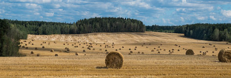 Hay field Stock Images