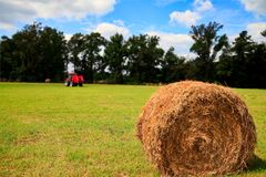 Hay, Field, Grassland, Grass royalty free stock photography