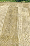 Hay Field After Harvest. A bare hayfield after it has been harvested Royalty Free Stock Photos