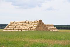 Hay on the field. royalty free stock photos