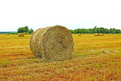 Hay in a field Stock Photography