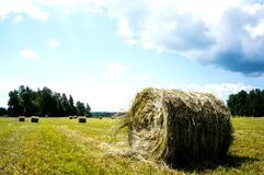 Free Hay Field In Cattle Rolls. Rural Nature On A Farm. Straw In The Meadow. Countryside Natural Landscape. Royalty Free Stock Images - 188979799
