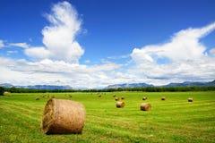 Hay field Stock Photos