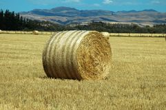 Hay field New Zealand Stock Images