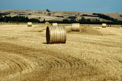 Hay field New Zealand Stock Photos