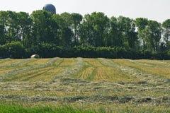 Hay Field. A raked hay field ready to be bailed Stock Photo