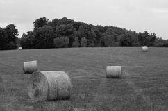 Hay field. Hay rolls in a field waiting to be sold Stock Image