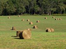 Hay Field With Round Bales Royaltyfri Bild