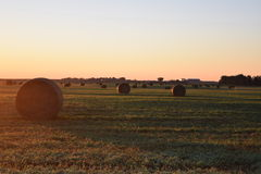 Hay bales in dawns early light Royalty Free Stock Photography