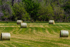 Hay Field with Round Hay Bales Royalty Free Stock Photos
